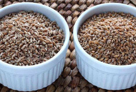 Spelta, speltino brašno i zrno upotreba u ishrani